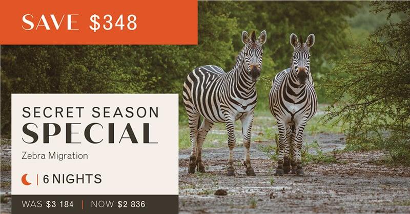 003 Zebra M_USD-01small