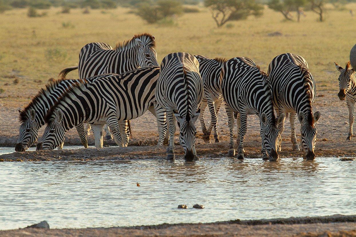 Migration-Expeditions-Nxai-Pan-Botswana-Shaun-Stanley-2015-(350)-2